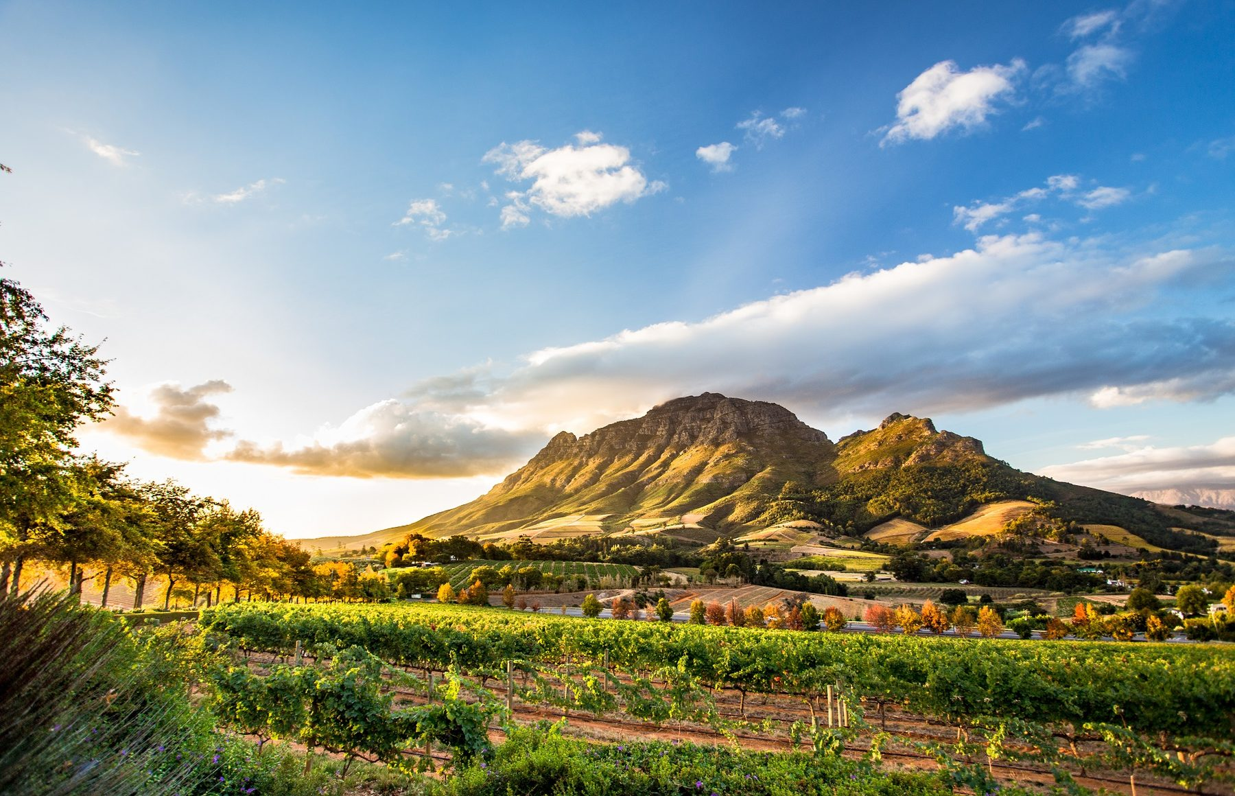 Luxury South Africa with the Blue Train