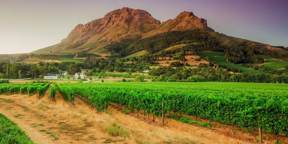 Cape Town, Garden Route & Safari